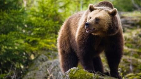Как спастись от медведя.