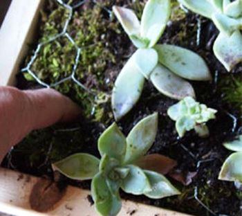Высаживаем растения в грунт