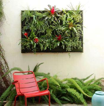 Растения для декора