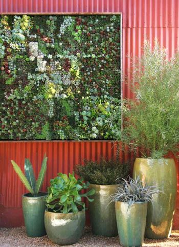 Сад на стене своими руками