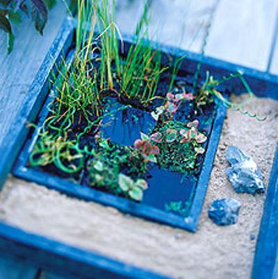Высаживаем водные растения