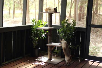Дерево для кота своими руками