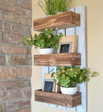 Стенд витрина для комнатных растений